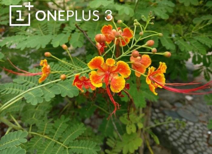 oneplus-3-kamera-test-1