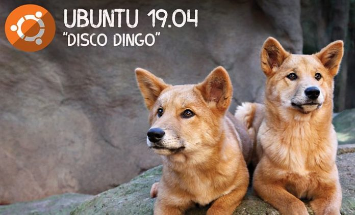 UBUNTU Disco Dingo